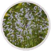 Lyreleaf Sage Wildflowers - Salvia Lyrata Round Beach Towel