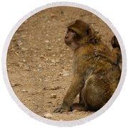 Macaque Monkeys Round Beach Towel