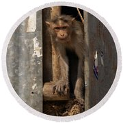 Macaque Peeking Out Round Beach Towel
