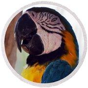 Macaw Head Study Round Beach Towel
