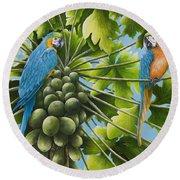 Macaw Parrots In Papaya Tree Round Beach Towel