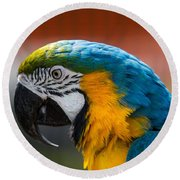 Macaw Tropical Bird Round Beach Towel