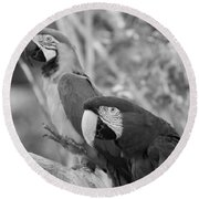 Macaws Of Color B W 14 Round Beach Towel