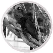 Macaws Of Color B W 15 Round Beach Towel