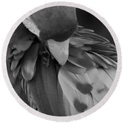 Macaws Of Color B W 16 Round Beach Towel