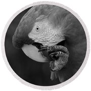 Macaws Of Color B W 18 Round Beach Towel