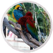 Macaws Of Color24 Round Beach Towel