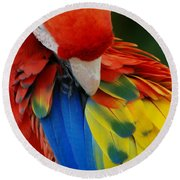 Macaws Of Color25 Round Beach Towel