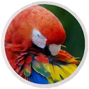 Macaws Of Color26 Round Beach Towel
