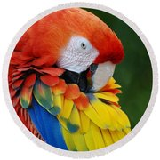 Macaws Of Color28 Round Beach Towel