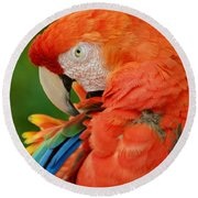 Macaws Of Color29 Round Beach Towel