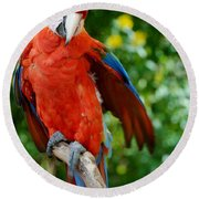 Macaws Of Color30 Round Beach Towel
