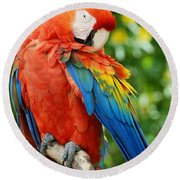 Macaws Of Color31 Round Beach Towel