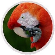 Macaws Of Color32 Round Beach Towel