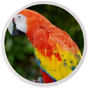Macaws Of Color33 Round Beach Towel