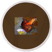 Macro Butterfly Round Beach Towel