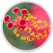Macro Close Up Of Hibiscus Pollen  Round Beach Towel