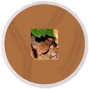 Macro Copperhead Round Beach Towel