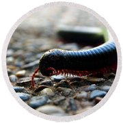 Macro  Millipede Round Beach Towel