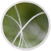 Macro Of A Green Palm Tree Leaf  Round Beach Towel