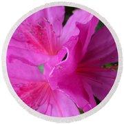 Macro Purple Azalea Flower Round Beach Towel