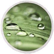 Macro Raindrops On Green Leaf Round Beach Towel