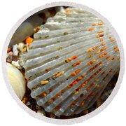 Macro Shell On Sand 4 Round Beach Towel by Riad Belhimer