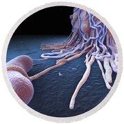 Macrophage Fighting Bacteria Round Beach Towel