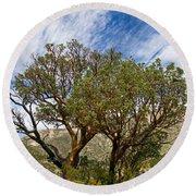 Madrone Trees Round Beach Towel
