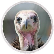 Maggee The Hooded Vulture Round Beach Towel