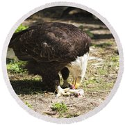 Magnificent Bald Eagle Breakfast Round Beach Towel