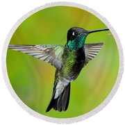 Magnificent Hummingbird Round Beach Towel