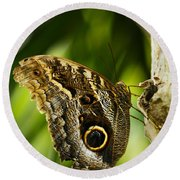 Magnificent Owl Butterfly Round Beach Towel