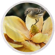Magnolia And Warbler Photo Round Beach Towel