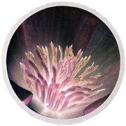 Magnolia Flower - Photopower 1821 Round Beach Towel