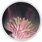 Magnolia Flower - Photopower 1824 Round Beach Towel