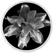Magnolia Tree Leaves Round Beach Towel