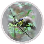 Magnolia Warbler - Bird Round Beach Towel