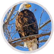 Majestic Bald Eagle Round Beach Towel by Greg Norrell