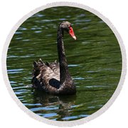 Majestic Black Swan Round Beach Towel