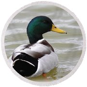 Majestic Mallard - Duck Round Beach Towel