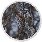 Majestic Owl Round Beach Towel