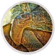 Majestic Tortoise Round Beach Towel