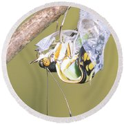 Malachite Butterfly Emerging 4 Of 6 Round Beach Towel