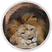 Male African Lion Round Beach Towel