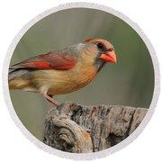 Male And Female Cardinal Round Beach Towel