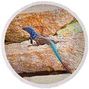 Male Bonaire Whiptail Lizard Round Beach Towel