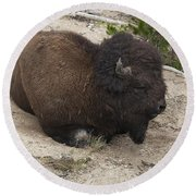 Male Buffalo At Hot Springs Round Beach Towel