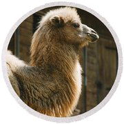 Male Camel Head Round Beach Towel