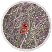 Male Cardinal Cold Day 2 Round Beach Towel
